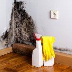 Fjernelse af skimmelsvamp resulterer i et renere indeklima